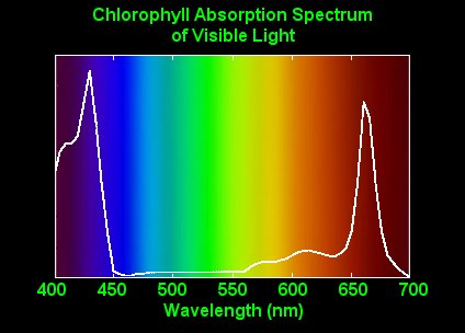 describe the relationship between chlorophyll and color of plants